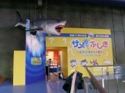 6.水族館企画展.JPG